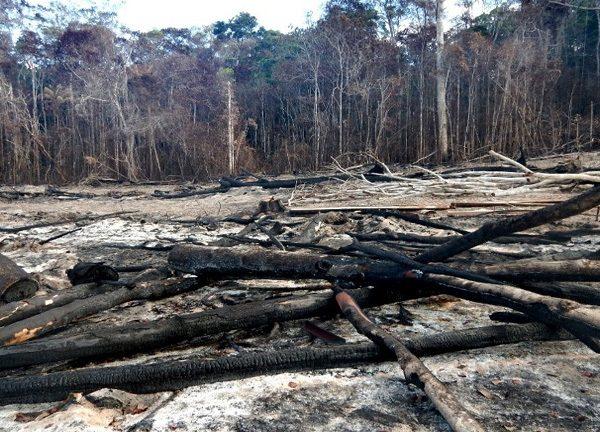 Área de Mata Atlântica desmatada no sul da Bahia em 2015. (Foto: Ibama/Divulgação)